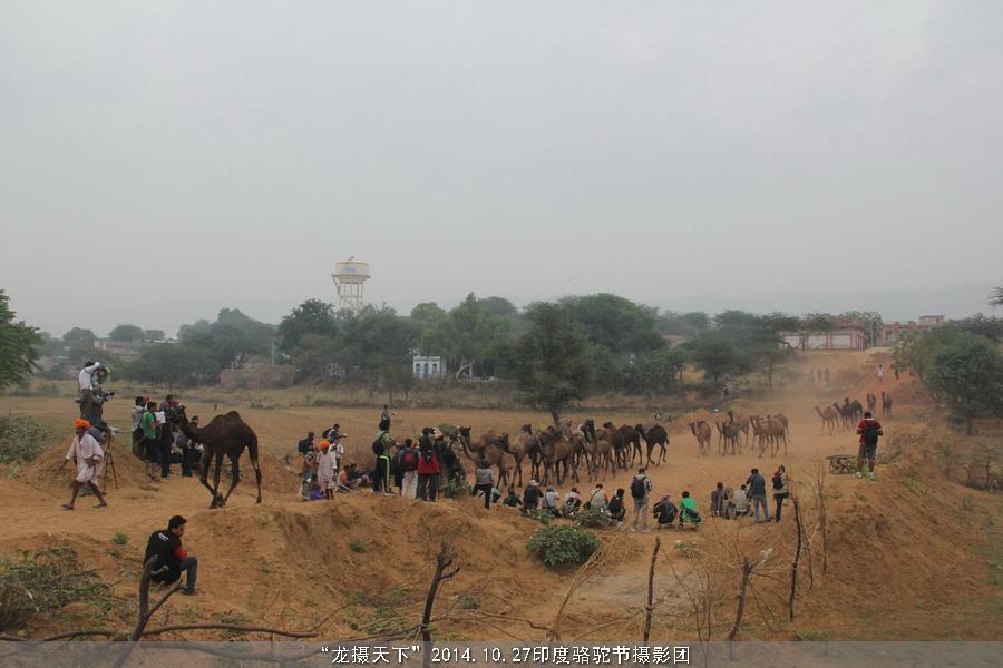 2014.10.27印度骆驼节摄影团花絮