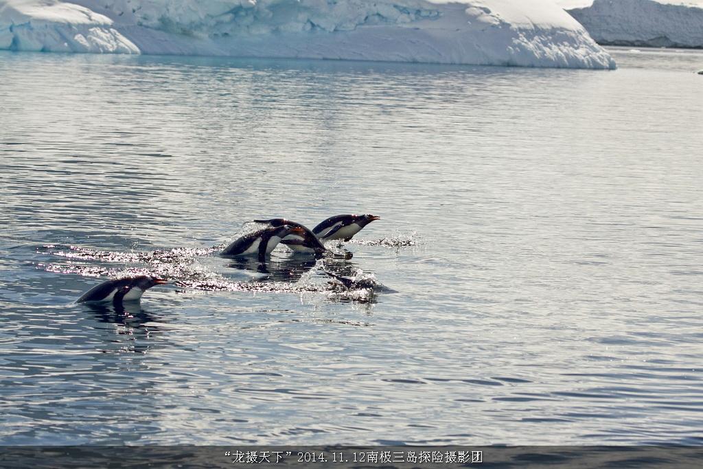 2014.11.12南极三岛探险摄影团花絮