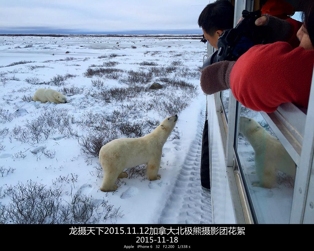 2015.11.12加拿大北极熊摄影团花絮