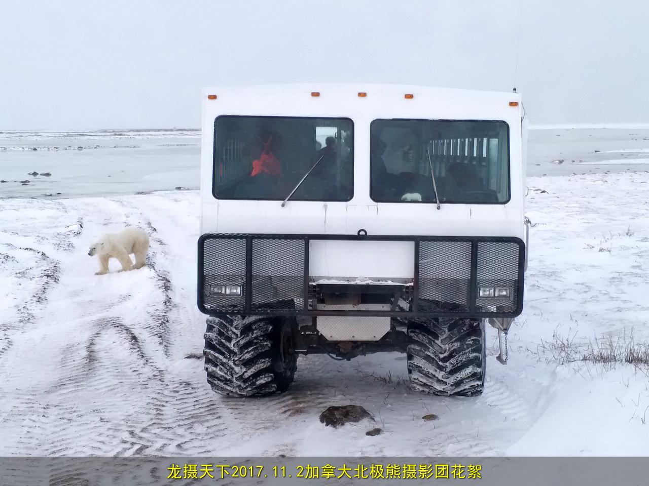 2017.11.2加拿大北极熊摄影团花絮