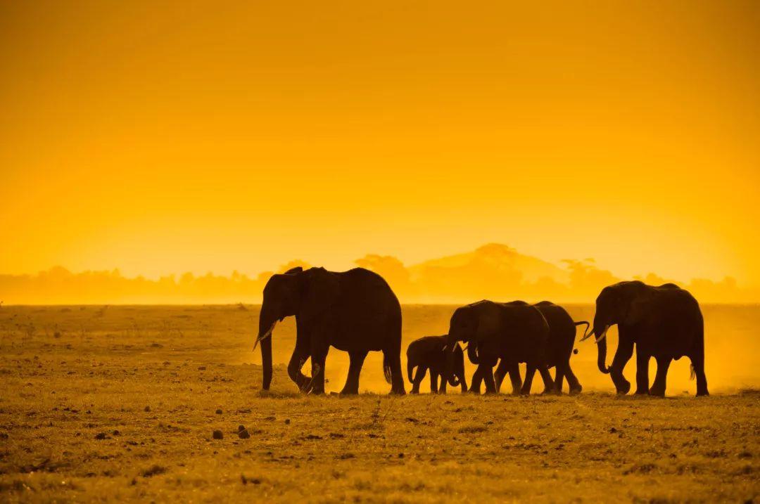 """感受生命的震撼,揭秘肯尼亚""""天国之渡""""绕脑谜题"""