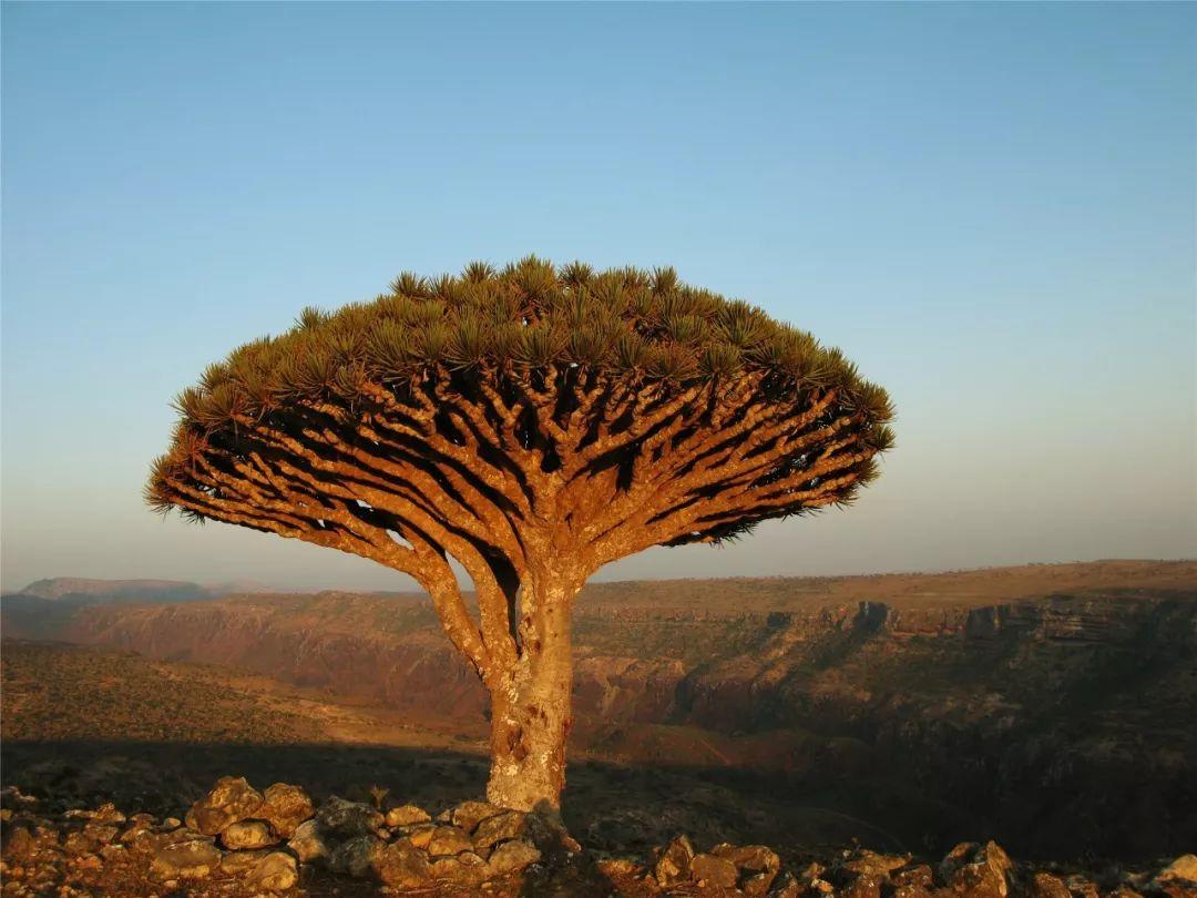 奇幻索科特拉岛,地球上最像外星的地方