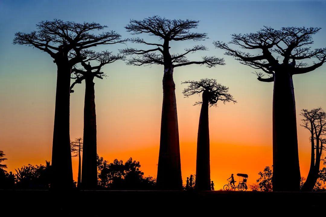 马达加斯加:非洲表情,生物圣地