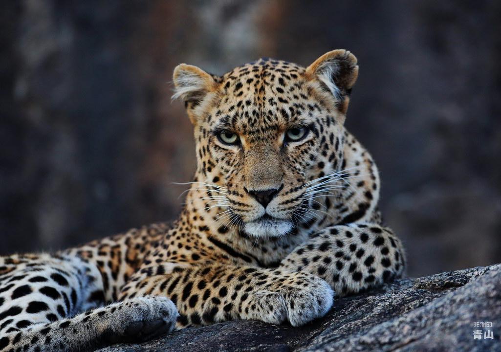 2020.11.15坦桑尼亚猎豹幼崽及野生动物世界摄影团